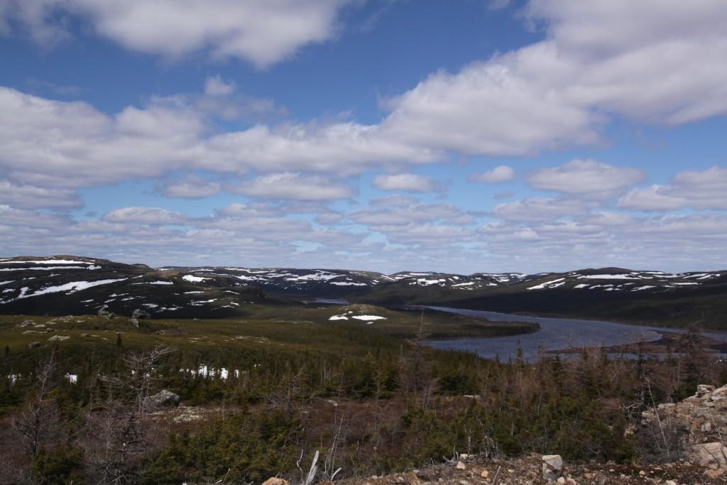 Stark Labrador landscape.